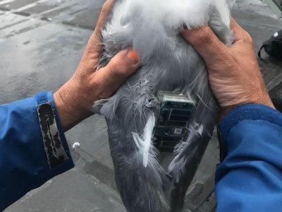 FLiteTraX on Seagulls in Maine