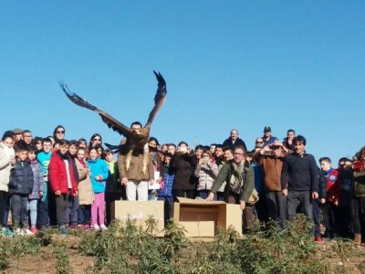 Release of rehabilitated Spanish Imperial  Eagle