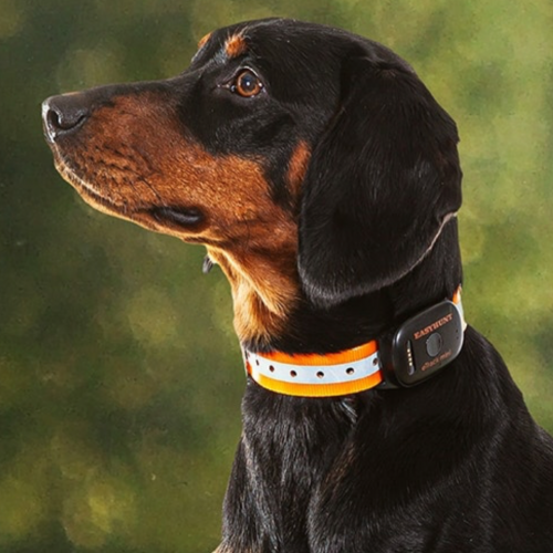 GPS/GSM Dog Tracking Collar  Tracking data uploaded to the EasyHunt App on your Smart Phone.  Induction charging .  Individual use with 1 dog. Team Use with up to 30 users and 30 dogs.
