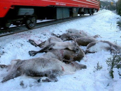 Preventing Reindeer Train Collisions